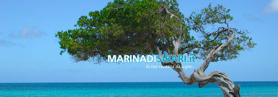 Albero Vicino al MareLocalità: Trebisacce, un albero vicino al mare in un ambiente quasi incontaminato. ...